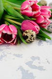 Pink tulips and quail eggs on white background Royalty Free Stock Image