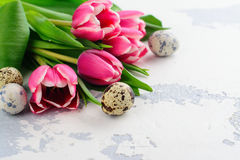Pink tulips and quail eggs on white background Stock Images