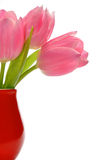 Pink tulips in red vase. Isolated on white Stock Images