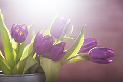 Pink tulips in retro bucket Royalty Free Stock Photos