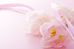 Pink tulips and ribbon. Pretty pink tulips on pink background Royalty Free Stock Image