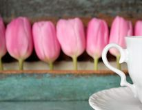 Pink tulips in a row with wooden background, mother's day Stock Images