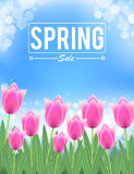 Pink tulips spring sale banner Stock Image
