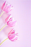 Pink tulips. Three pink tulips over pink background Royalty Free Stock Photography