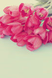 Pink tulips, tinted. Big beautiful bouquet of pink tulips, tinted Royalty Free Stock Photography