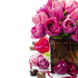 Pink tulips Valentine's day Stock Image