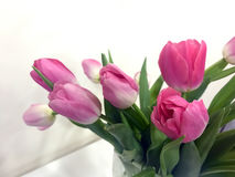 Pink tulips on Valentine`s day for your beloved Royalty Free Stock Images