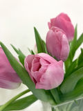 Pink tulips on Valentine`s day for your beloved Royalty Free Stock Photography