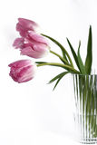 Pink tulips in a vase Royalty Free Stock Image