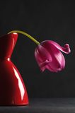 Pink tulips in a vase Stock Image