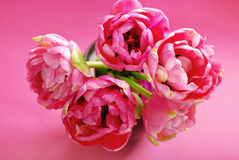 Pink tulips in vase Royalty Free Stock Image