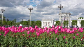 Pink tulips on VDNKh. Beautiful tulips flowers on VDNKh, Moscow Russia stock video