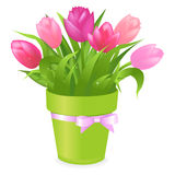 Pink Tulips. Vector Royalty Free Stock Photos