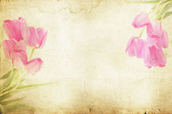 Pink tulips on vintage background Stock Image