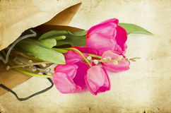 Pink tulips on vintage background Stock Images