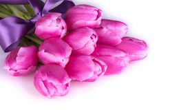 Pink tulips on white background. Pink tulips on white background with purple ribbon Royalty Free Stock Images