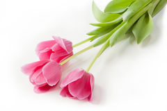 Pink tulips on white background. Three pink tulips on white background, three gentle flowers Royalty Free Stock Images