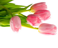 Pink tulips on white. Beautiful bouquet Stock Photos