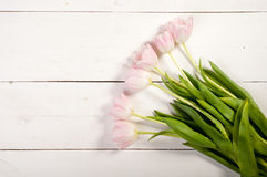 Pink tulips on white boards Royalty Free Stock Image