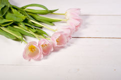 Pink tulips on white boards Stock Photography
