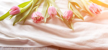 Pink tulips on white fabric, lit by the rays of the setting sun.  Stock Photo