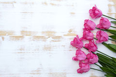 Pink tulips on white rustic wooden background Stock Image