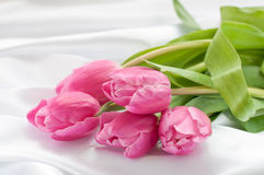 Pink tulips on white silk Stock Image