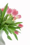 Pink tulips in a white vase Stock Photo