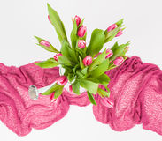 Pink Tulips i Royalty Free Stock Images