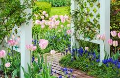 Pink tulips with white wooden trellis Royalty Free Stock Photos