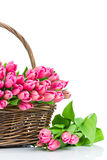 Pink tulips in the wicker Stock Photo