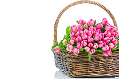 Pink tulips in the wicker Stock Photos