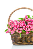 Pink tulips in the wicker Stock Image