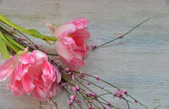 Pink tulips on wood background Royalty Free Stock Photo