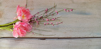 Pink tulips on wood background Stock Photography