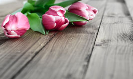 Pink tulips on a wooden background Stock Photo