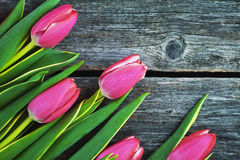 Pink tulips on a wooden background Stock Photos