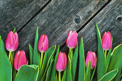 Pink tulips  on a wooden background Royalty Free Stock Photo