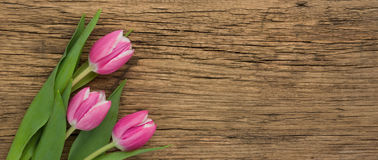 Pink Tulips on a wooden background with copy space Stock Photo