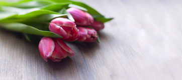 Pink tulips on a wooden background with water drops on stems and flowers Stock Photos