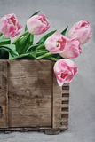 Pink tulips in a wooden box Royalty Free Stock Photography