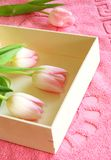 Pink tulips in wooden box on towel Stock Images