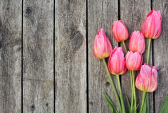 Pink Tulips on Wooden Planks. Pink Tulips in droplets of dew on wooden planks royalty free stock photos