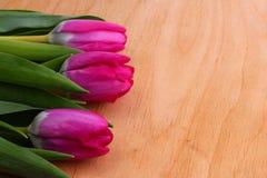 pink tulpan Royaltyfri Foto