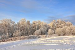 Pink twilight in the winter forest - beautiful winter landscape royalty free stock photo