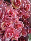 Pink valentine roses  glitter by diamond chip Stock Images