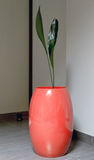 Pink vase with a plant Royalty Free Stock Photography