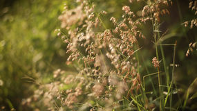 Wild plants in the morning Stock Image
