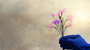 Pink and violet colorful flowers in the gardener hand on pastel royalty free stock images