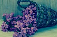 Pink violet flower Royalty Free Stock Images
